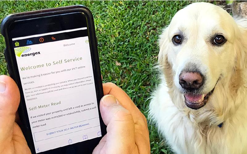 energex-dog-meter-reader